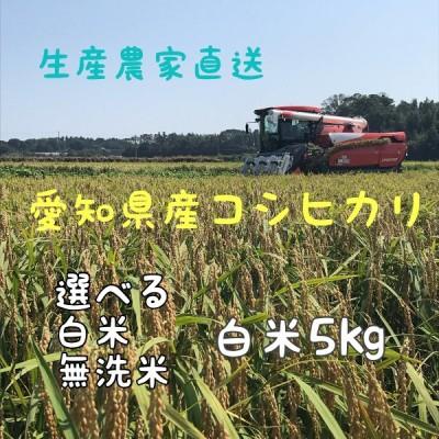 令和3年産 コシヒカリ 5kg 愛知県産 選べる 白米 無洗米 生産農家直送