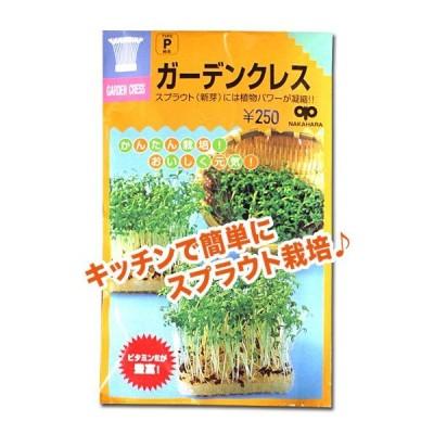 スプラウトの種 ガーデンクレス(胡椒草)35ml(メール便発送)