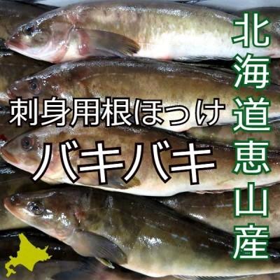 北海道恵山産 希少 バキバキ 根ほっけ 三尾 お刺身