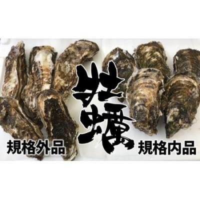 RT852【訳あり規格外品】三陸広田湾の殻付き牡蠣20個