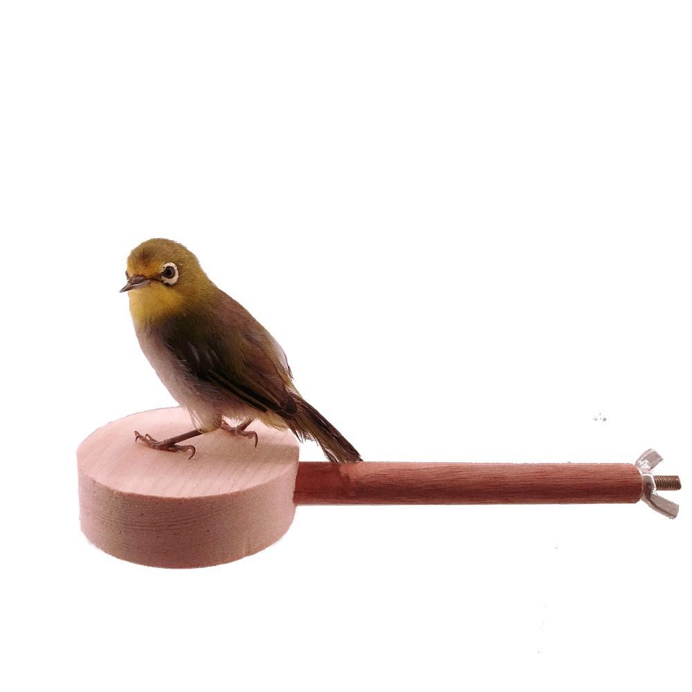MY PET BIRD  松木圓延伸站台 W729