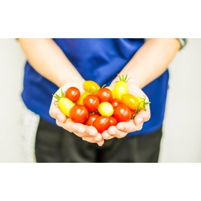 手間なしで華やかサラダに!四万十産ミニトマト「ミックス」1㎏ Fbg-08