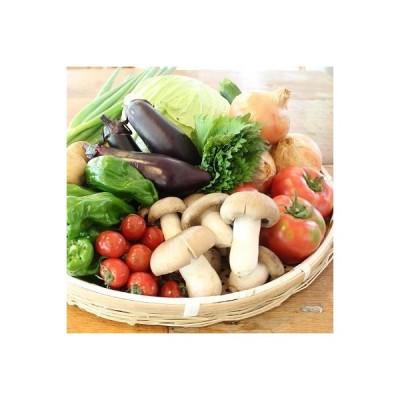 京丹波町 ふるさと納税 京丹波町和知地区で栽培された旬の地場野菜おまかせ詰め合わせ