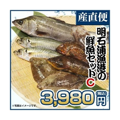 取れたて新鮮! 明石浦漁港の鮮魚セットC 安心・安全な明石浦の魚【鮮魚セットC】