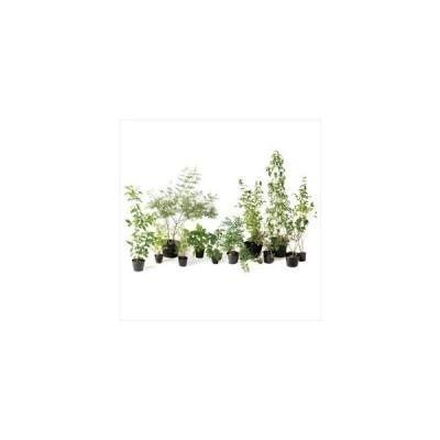 オンリーワン メインガーデン 植栽セット ブリーゼ フォーシーズンズ やさしい景色 KJ6-SET05