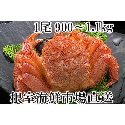 B-14016 ボイル毛がに900g~1.1kg×1尾