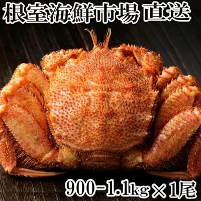 根室海鮮市場ボイル毛がに900g~1.1kg×1尾 B-28016