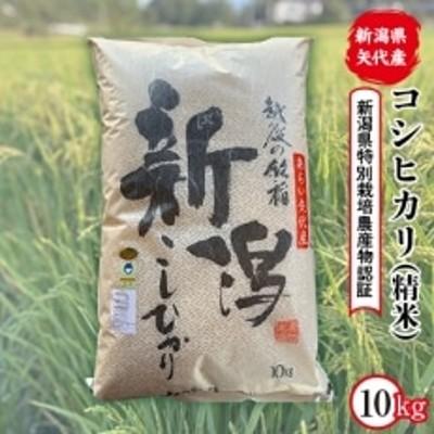 【令和3年産】新潟県矢代産コシヒカリ 10kg