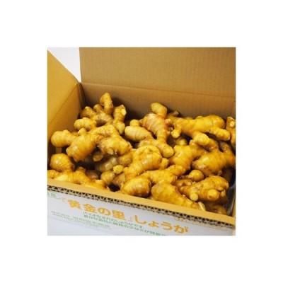 香美市 ふるさと納税 高知県産】黄金しょうが 約4kg