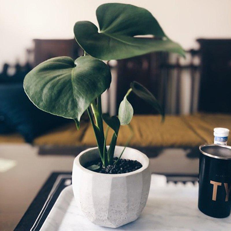 【一秒變質感.室內綠植.免運】桌上型 龜背芋水泥盆栽