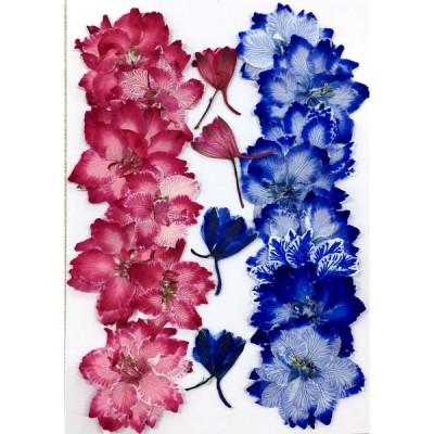 コンパクト 押し花 千鳥草(キャンディポップ B)着色18枚  少量をパックにしてお届け! 押し花 ハンドメイド