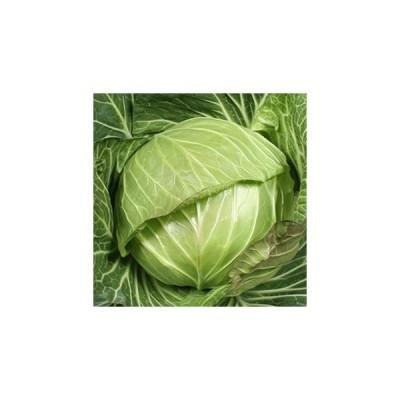 キャベツの種 あまだま 小袋 約1.5ml ( 野菜の種 )