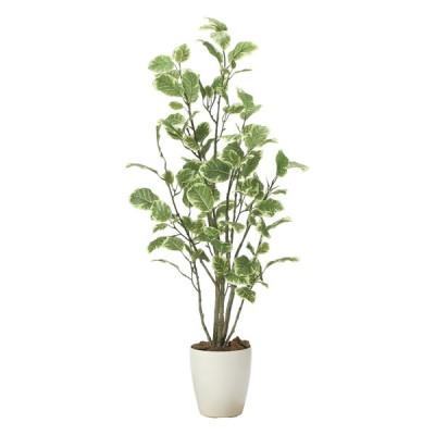 光触媒観葉植物 ポリシャス1.15 〔フロアタイプ〕 インテリア フェイクグリーン おしゃれ アートグリーン 緑 リビング 鉢植え プレゼント ギフト