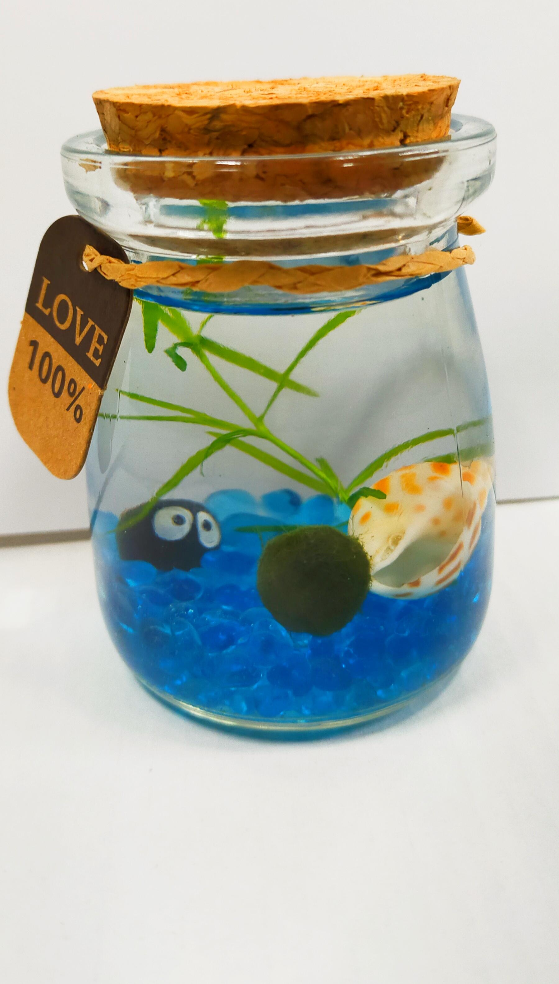 (特價中)親子DIY 水草瓶水草缸 生態瓶 魚草共生 餐廳辦公桌裝飾 療癒小物 綠藻球瓶 炸毛君 團體禮品聖誕節交換禮物