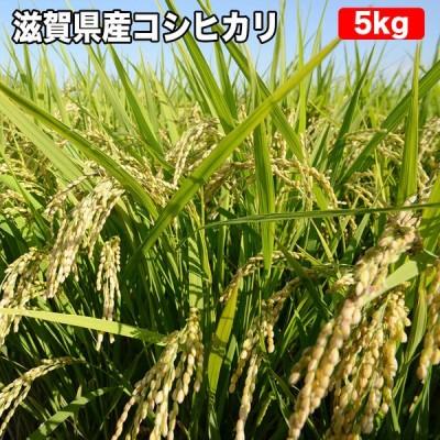 滋賀県産 コシヒカリ 5kg お米【選べる搗き方 白米・ハイガ米・玄米・8分搗きなど】