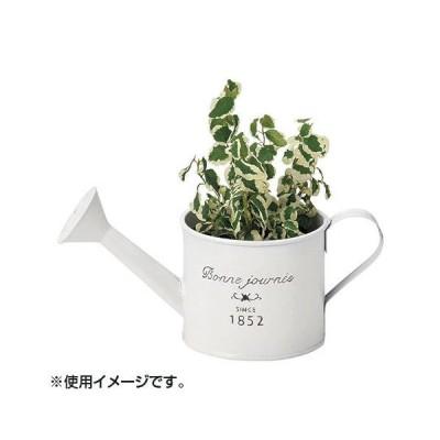園芸 ガーデニング 鉢植え 植木鉢 雑貨 植物 インテリア おしゃれ ブリキプランター 10-15
