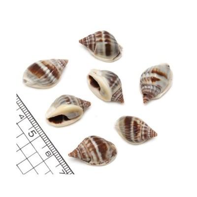 【小さな貝殻パーツ】オオカニノテムシロガイ SSサイズ 5個