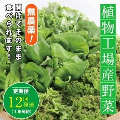 10-03 植物工場産野菜・お徳用12セット(1年契約)1セット×12回