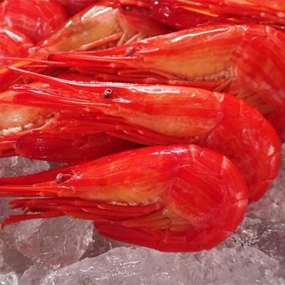 【北海道根室産】根室海鮮市場北海しまえび500g×1P A-28132