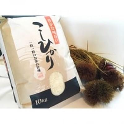 近江米コシヒカリ10kg×1袋 精米