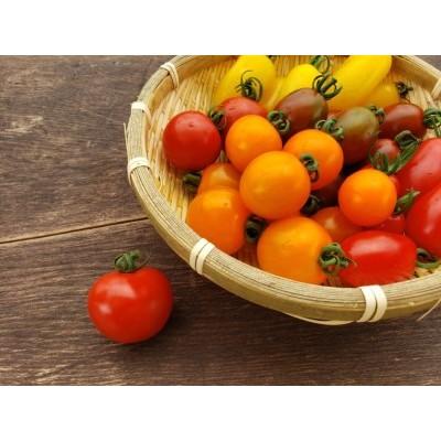 《事前予約制》《期間限定・数量限定》飛騨産 トマト ミニトマト カラフルキュートなミニトマトの詰め合わせたっぷり1.5kg![Q216]