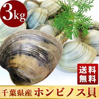 活きホンビノス貝(サイズ無選別)3kg入 白はまぐり 送料無料 BBQに!ギフトにも最適!