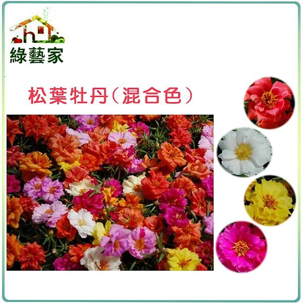 【綠藝家】H37.松葉牡丹(混合色,匍匐性)種子0.02克(約60顆)