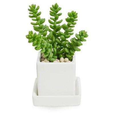 フェイクグリーン 観葉植物 インテリア モルガニアナム エコストーン 皿付ミニベース  PRGR-1112E