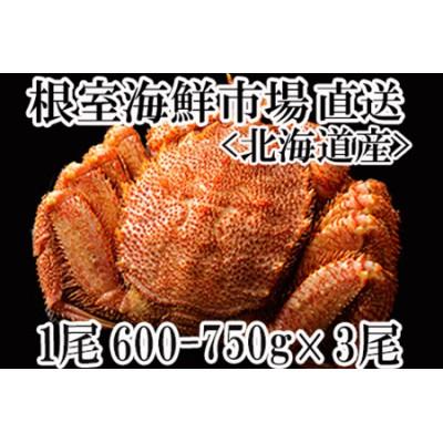 <12月6日決済分まで年内配送> ボイル毛がに600~750g×3尾 D-11010