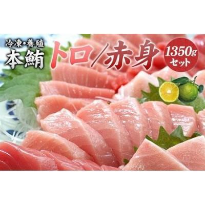 本マグロ(養殖)トロ&赤身セット たっぷり!1350g(串本町×北山村)