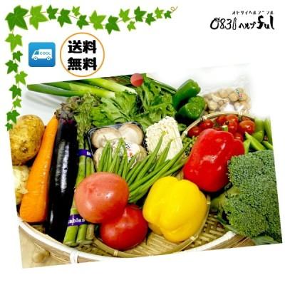 新鮮お野菜セット -九州野菜8品- +おまけのお野菜4〜6品 送料無料