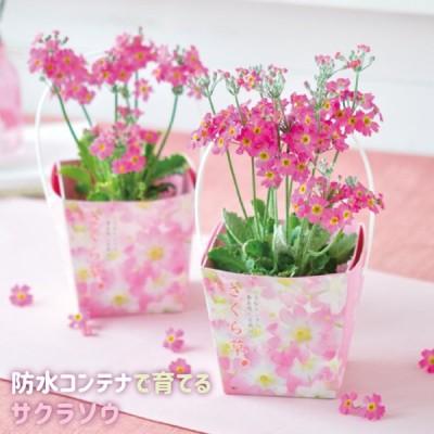 聖新陶芸 Floral Container サクラ草 GD486
