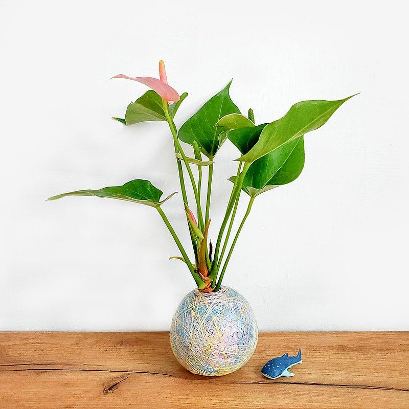 彩織球・晨曦微風/火鶴・彩色苔球・防疫植物 去甲醛・父親節禮物