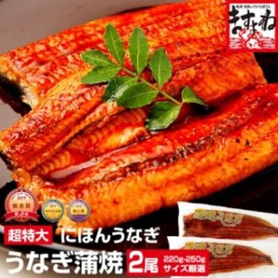 ギフト うなぎ ウナギ 鰻 ニホンウナギ蒲焼(台湾産) 超特大うなぎ薄焼き2尾セット(220g~250g×2尾) 送料無料 タレ・山椒・化粧箱付き の