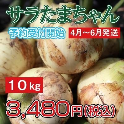 玉ねぎ/新玉ねぎ/サラダタマネギ/サラたまちゃん/サラたま/熊本県/サラたまちゃん10kg