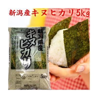 【お米 5kg】新潟県産 5kg キヌヒカリ5kg(7分づき)令和2年 お米 2020 白米 分づき お米安い 米5kg 新潟産米 美味しいお米 農家