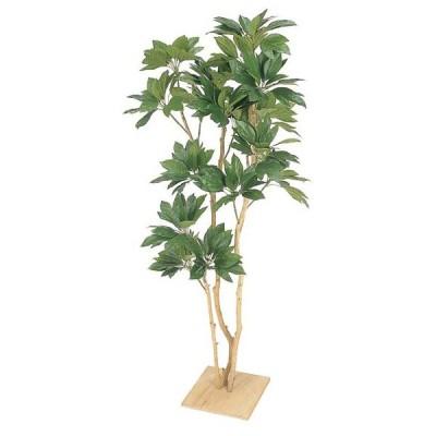 人工観葉植物!カクレミノ(板付)(人工)