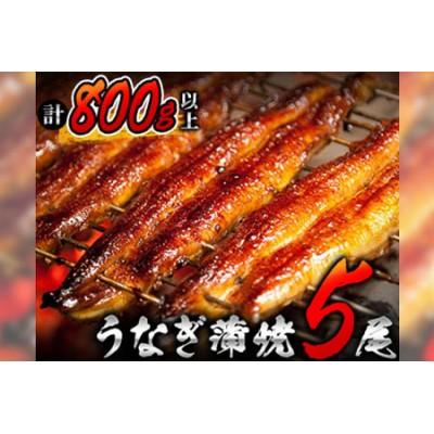 BB15-0103 うなぎ蒲焼5尾(計800g以上)国産鰻(ウナギ・さんしょう・たれセット)