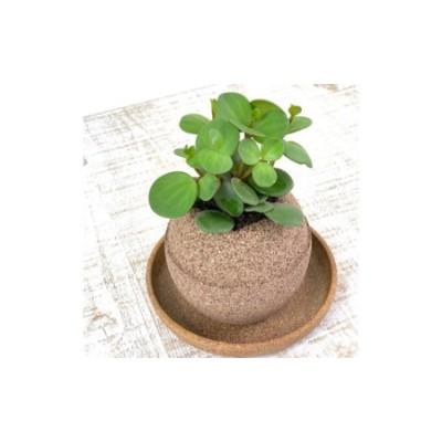 No.232 アクアプラントポット玉-S鉢植えペペロミアホープ