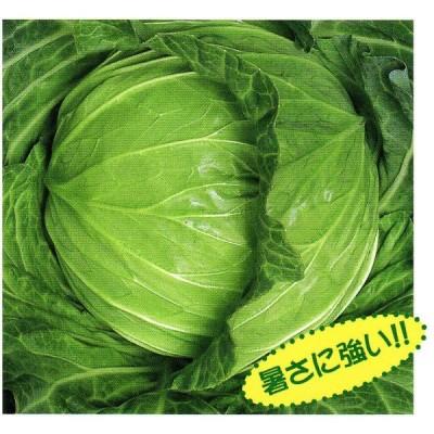【キャベツ種子】松島交配(渡辺採種場) 「楽園(らくえん)」 小袋