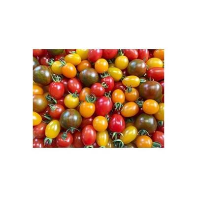 玉名市 ふるさと納税 農家直送カラフルミニトマト彩りバラエティーセット3kg