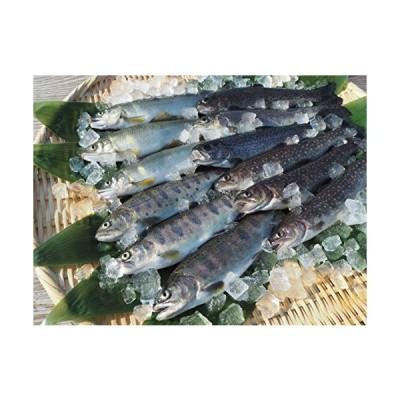 国産魚沼産清流の川魚セット 12尾入ヤマメ3尾 ・ イワナ3尾 ・ ニジマス3尾 ・ アユ3尾 (清流の川魚セット)