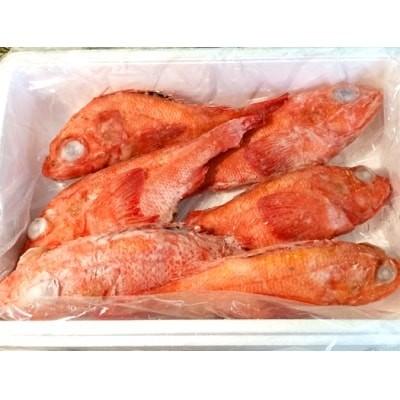 冷凍キンキ3kg(6尾)