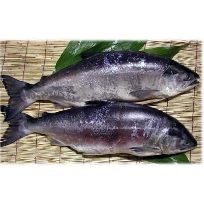ロシア産塩紅鮭1尾(2.0kg)姿切り