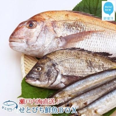 せとぴち!鮮魚BOX(8~10kg)