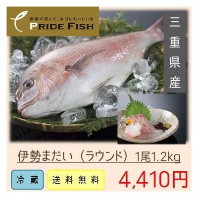 送料無料 伊勢まだい(三重県産)ラウンド約1.2kg 刺身 PRIDE FISH プライドフィッシュ選定