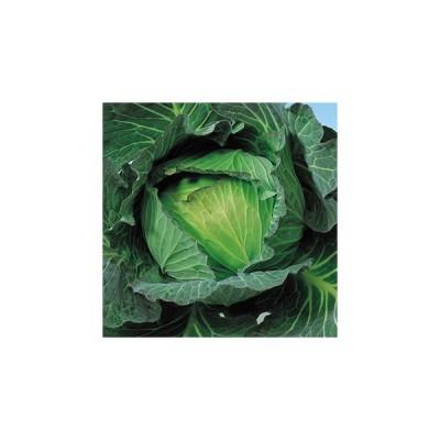 キャベツの種 YR冬景色 小袋 約1ml ( 野菜の種 )