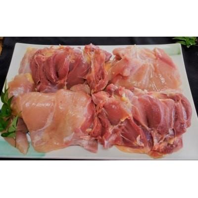 鹿児島県産 種鶏 1匹
