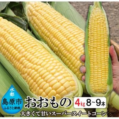 AE155【平均糖度19度!】とうもろこし おおもの スーパースイートコーン 約4kg 【3Lサイズ以上!】