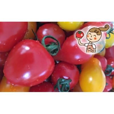 <2021年6月下旬よりお届け>北海道壮瞥産 彩りミニトマト約3kg